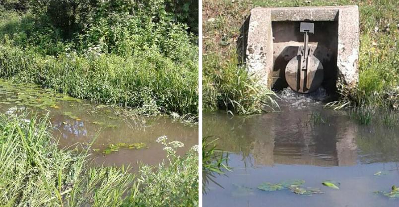 Co zabiło ryby w Płonce? WIOŚ odpowiada na pytania Kliknięcie w obrazek spowoduje wyświetlenie jego powiększenia